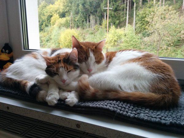 Susi und Charly beim Kuscheln auf der Fensterbank