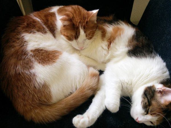 Susi und Charly kuscheln am Bürosessel im crosseye Büro