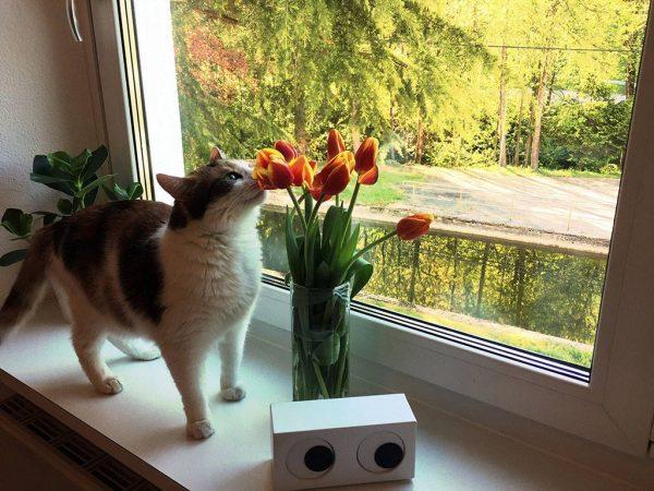 Susi mit den Tulpen im crosseye Büro